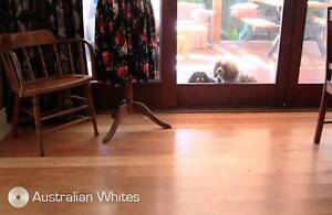 Australian Mixed Forest Whites Solid Timber Flooring Yennora Parramatta Area Preview