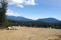 Multi use Acreage with a view!