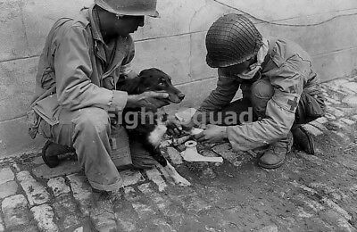 WW2 Picture Normandy 1944 2 US 1st Army medics give first aid to French dog 1526
