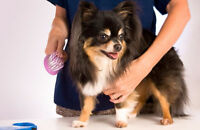Hiring P/T Groomer, Grooming Assistant, Bather