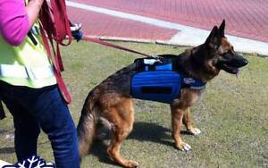 Dog Cooling Gear Ipswich Ipswich City Preview