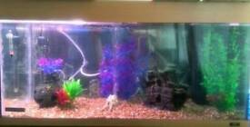 Juwel 180 fish tank setup