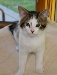 Cute Kitten FREE to a Loving Home
