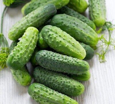 Cucumber ZASOLOCHNIY Seeds pickling cucumbers Ukraine non-gmo 1g Farmer idea (Cucumber Ideas)