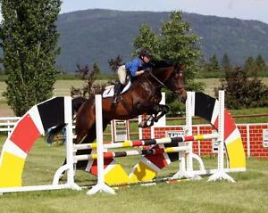 Buying or Selling a Horse? Check out CrossCountry Horse Sales