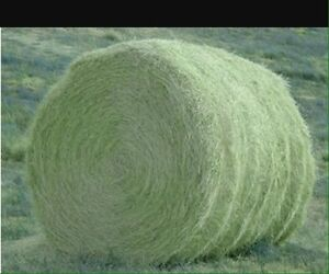 Looking for good quality horse hay