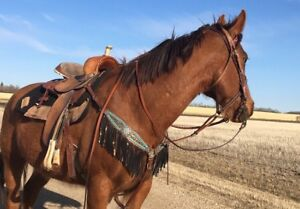 Looking to put miles on horses