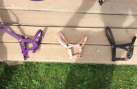 Assorted Halters - various sizes