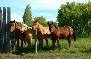 ~A Solid Foundation ... Sharing the Passion for Horses