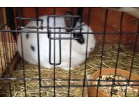 Rabbit plus hutch plus carry case plus feeding bottle, bowl and food