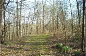60 Acres of Land Investment Opportunity in Ellijay, GA