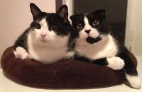 Pension Hotel  ou visite à domicile pour chat