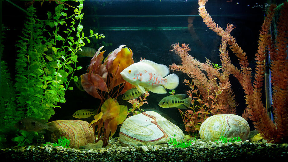 Your Guide to Keeping Coral in Your Aquarium