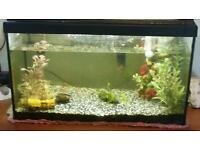 Fish tank, light, filter & 2 fish for sale