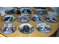 Denby mint Dog plates