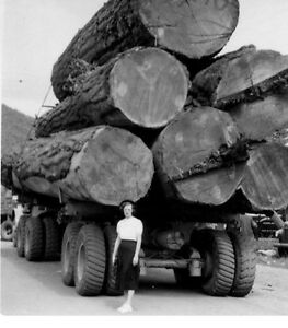 Buying large fir logs