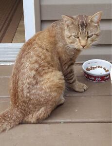 Toffy, magnifique chat abandonné