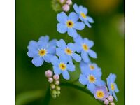 (Forget - me - not) - Grave Maintenance Service