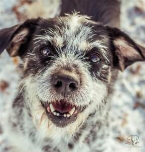 "Young Male Dog - Terrier: ""Jack"""