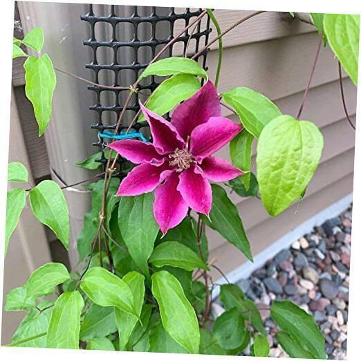 A Sleek, Narrow and Unobtrusive Garden Trellis for up to 9 feet Tall 1
