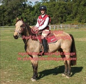 Smart Buckskin Mare - Genuine Sale Rockhampton Rockhampton City Preview