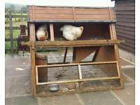 Brahma hen chickens and coop/house