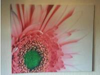 Large stretched canvas flower high definition