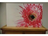 Pink gerbera petals canvas art