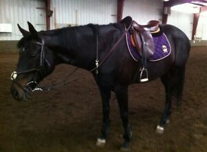 OTTB Mare Affordable, Flexible 1/2 Lease