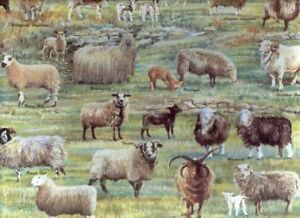 13 ewes for sale