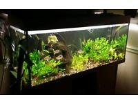 Quick sale Rio240 aquarium tropical full set up