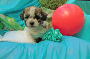 Adopt Dogs & Puppies Locally in British Columbia | Pets | Kijiji