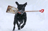 *$80/Month.* -> *Snow Removal!* +1 (204)-800-7675 CALL NOW! =)