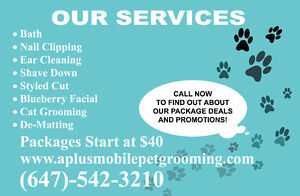Mobile Dog Grooming Services at A+ Mobile Pet Grooming