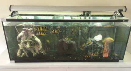 4ft fish tank with white customized cupboard