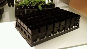 Plant tray filled with 40 tubes (40mm x 80mm) seedling pots propagation plastic