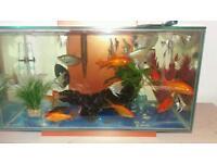 Fuwel edge fish tank