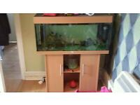 Fish tank and acceseries