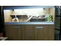 vivarium and stand with full set up