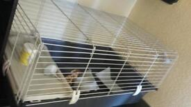 Cage for rabit or ginua pig or any small pet