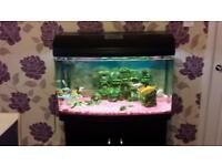 Fishtank really good condition low price!!