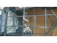 2 cockateil birds for sale with cage £175
