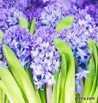 Flower Bac