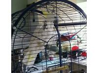 Frendly cockatoo for sale
