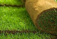 Special: Sod Installation For $0.80/Sqft! Free Quotes Provided