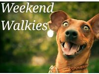 Blackwood & Surrounds: Does your dog need a proper walk on the weekend?