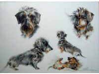 MICHELLE PEARSON COOPER LONGHAIRED DACHSHUND WATERCOLOUR PAINTING