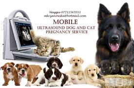 Ultrasound scanning service mobile