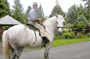 WANDED  A BELGIUM OR PERCHERON MARE,TO RIDE AND SAFE FOR CHILDR