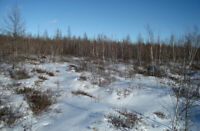 Investment Property (123Ac.)- Merrickville-Wolford